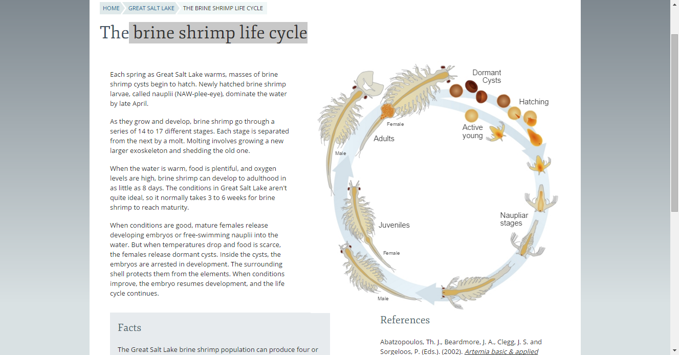 The brine shrimp life cycle | Ed-U : Biology images | Pinterest ...