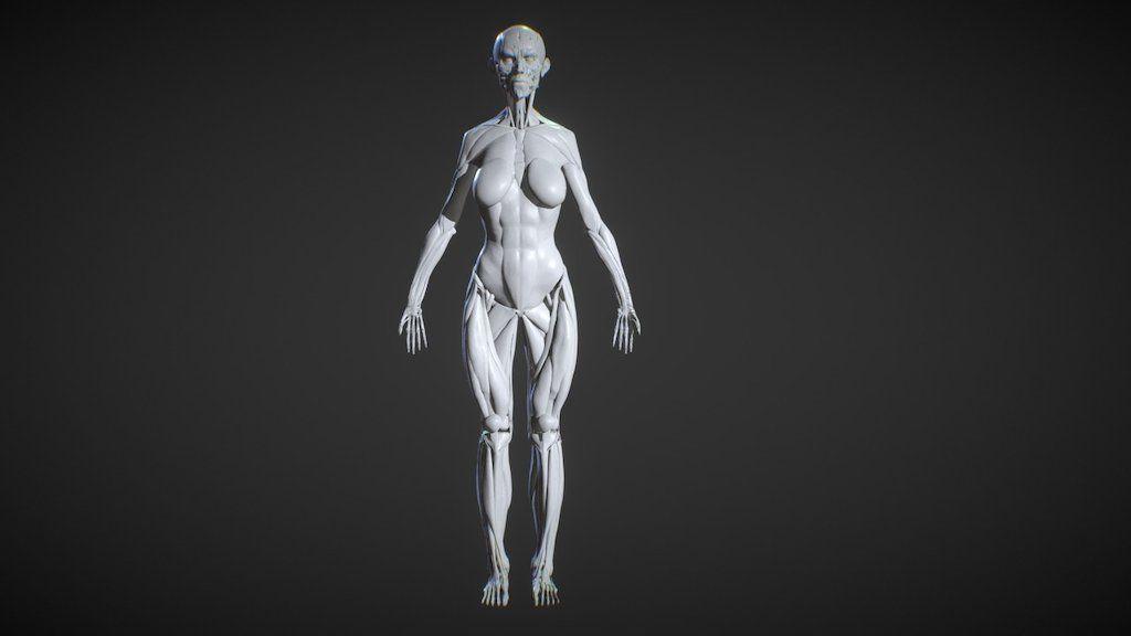 Female Body Muscular System Anatomy Study By Ruslangadzhiev 3d