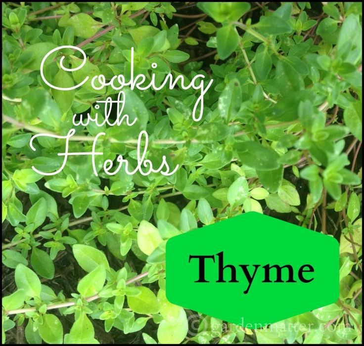 Cooking With Herbs All About Thyme Herbs Cooking Herbs Thyme