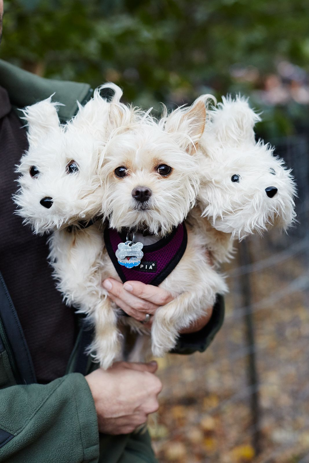 The 40+ Best Dog Costumes EVER | Halloween | Pinterest ...