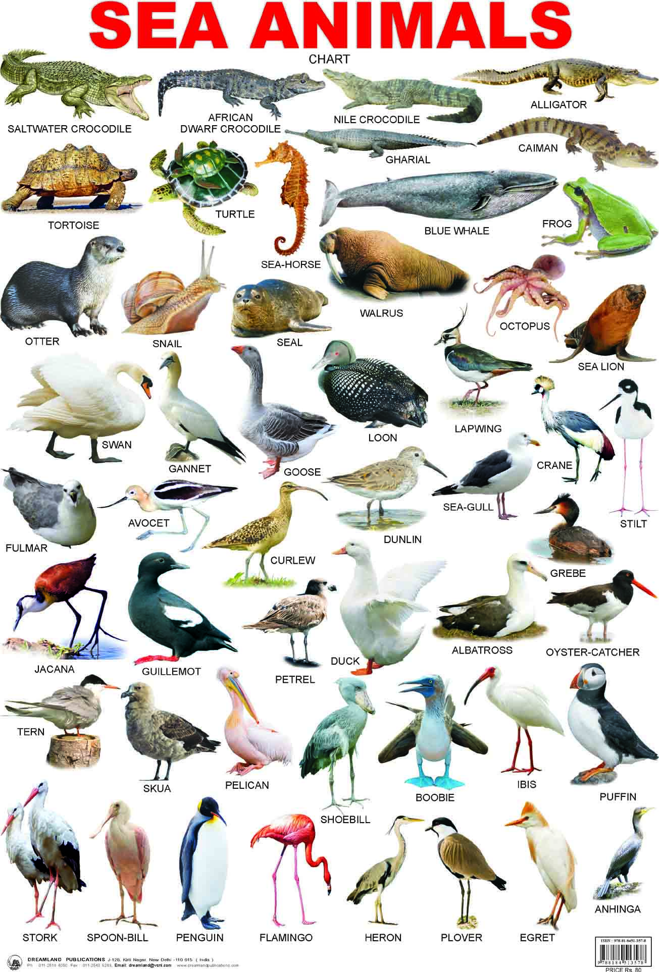 list of sea animals Google Search Animals name in