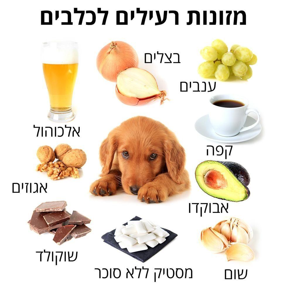 (צילום shutterstock) Can dogs eat grapes, Can dogs eat