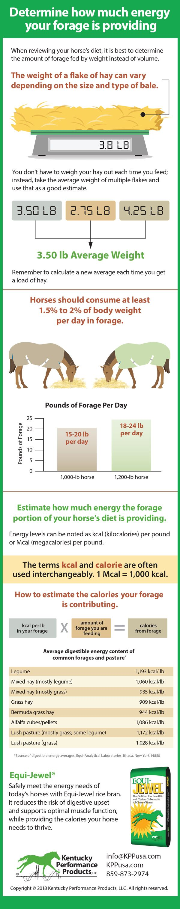 Determine How Much Energy Your Forage Is Providing Kpp Equine Nutrition Horses Diet Horse Health