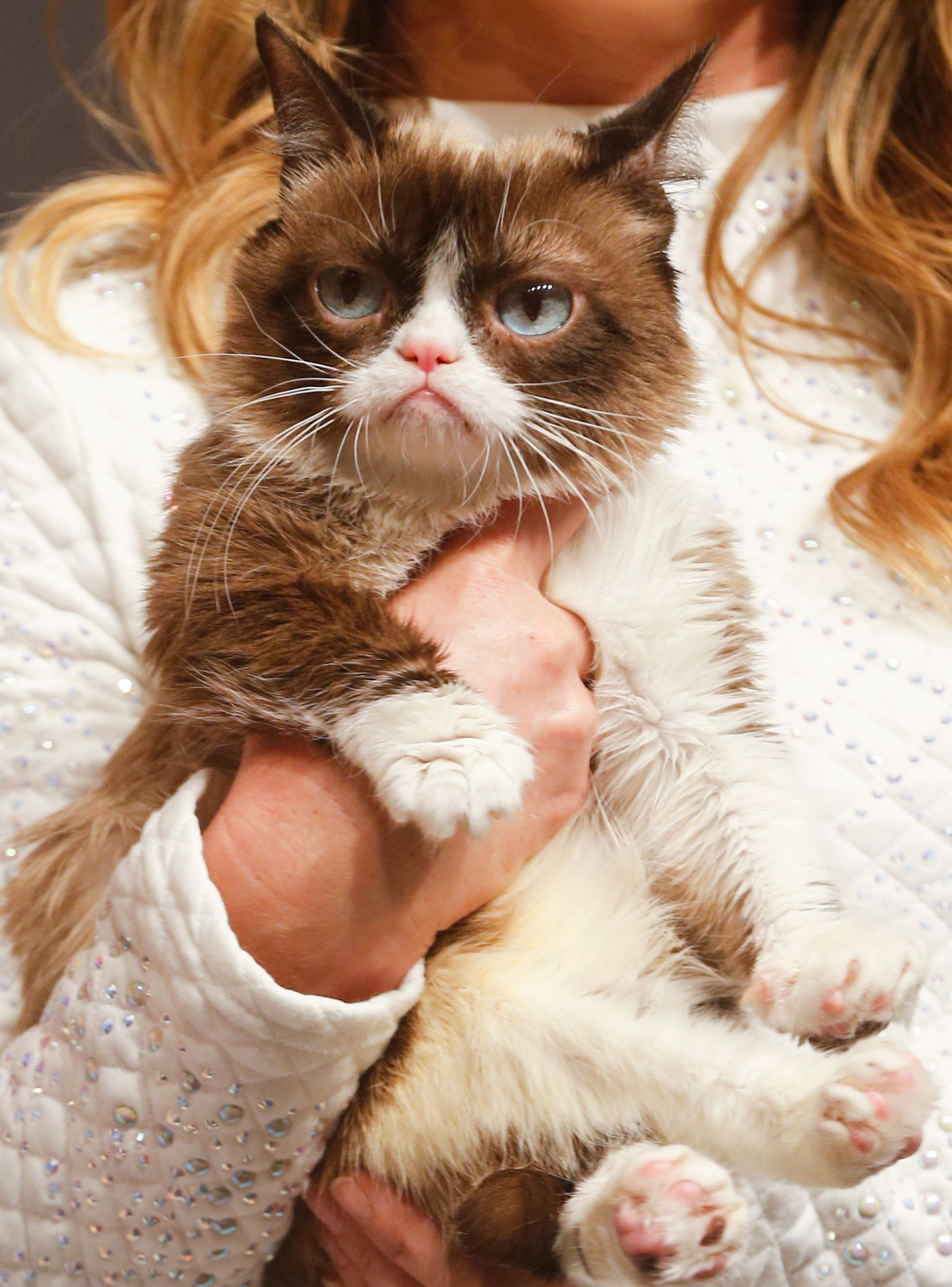 Grumpy Cat Has Died — But Her Memes Will Live Forever