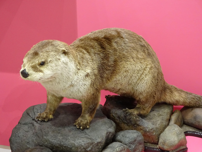 Beaver animals beaver kangaroo