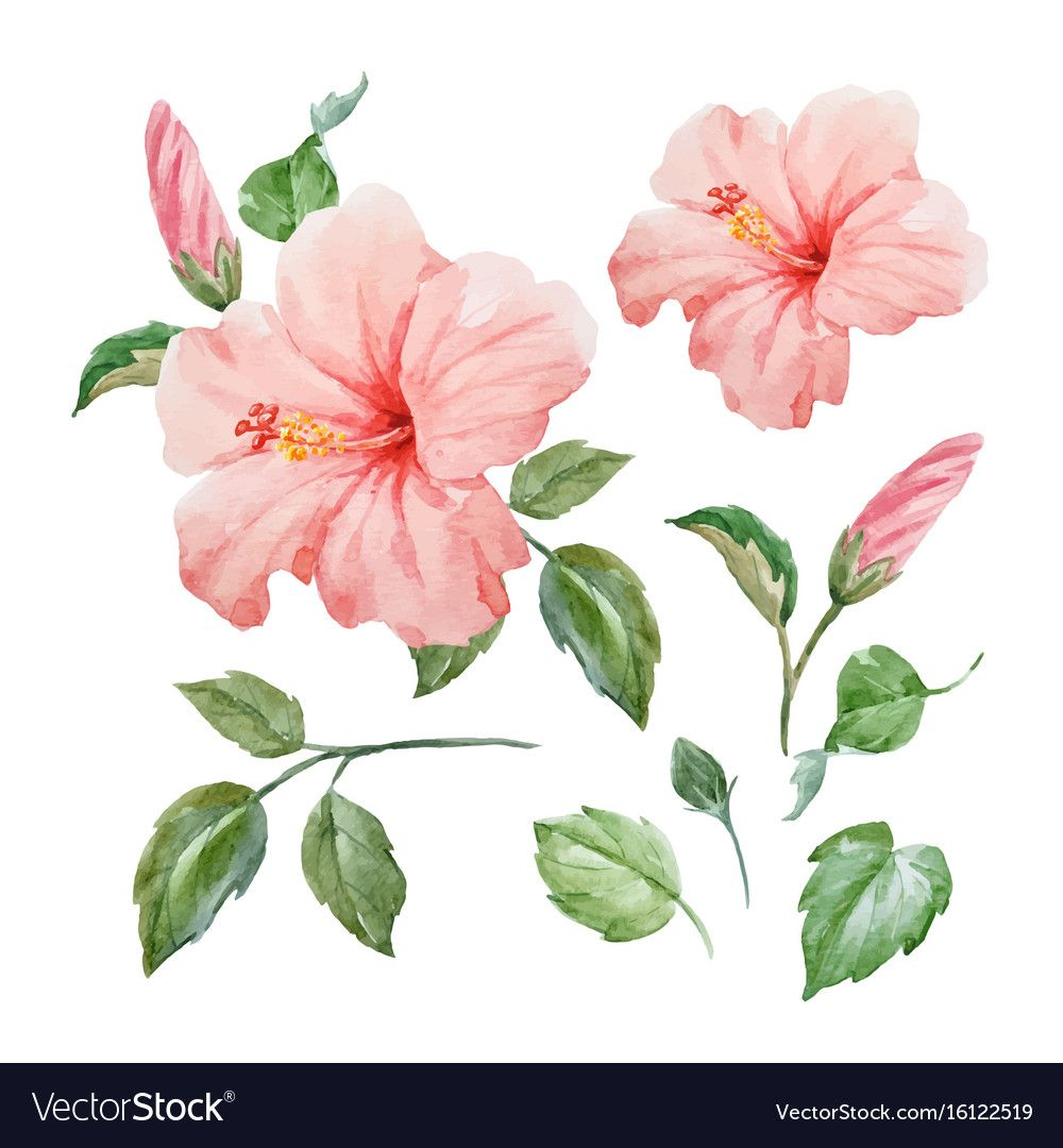 Watercolor Tropical Hibiscus Flower Royalty Free Vector Aff Hibis Watercolor Flower Vector Tropical Flowers Illustration Botanical Illustration Watercolor