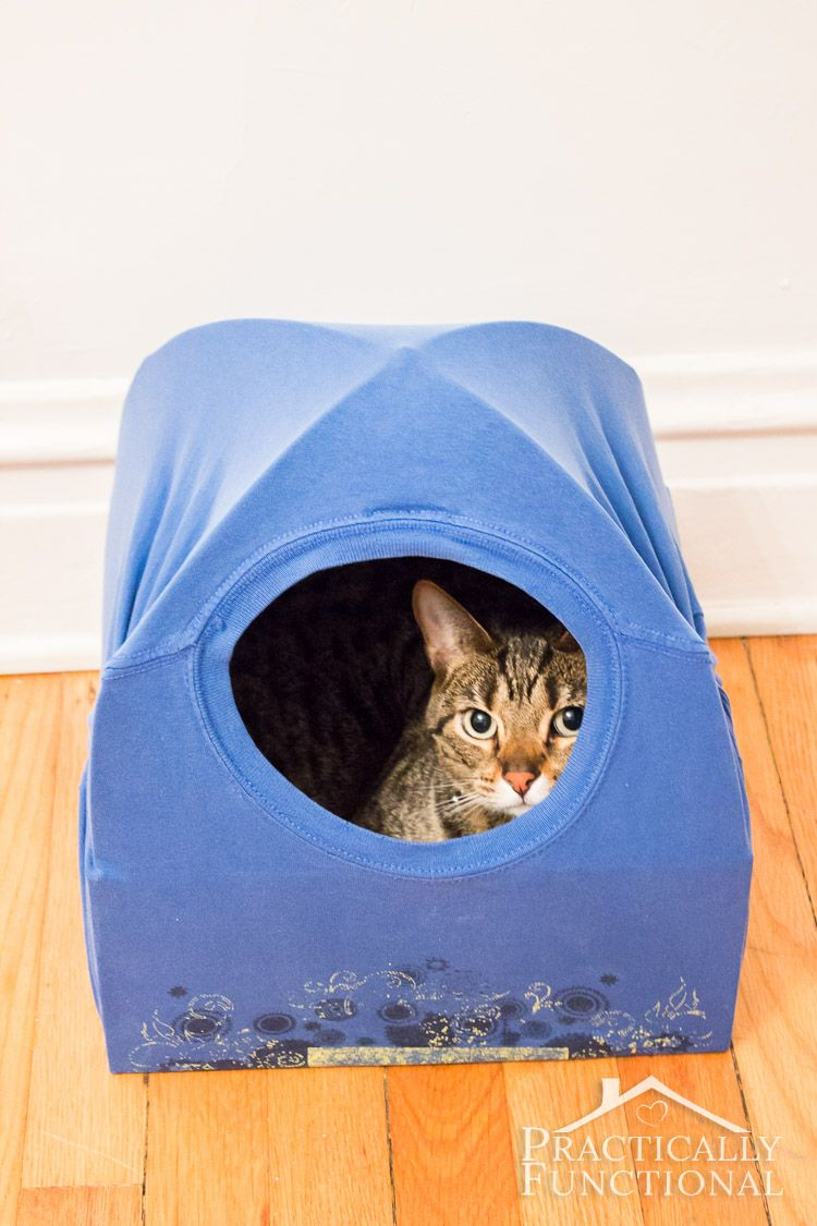 DIY Cat Tent Bed | Diy cat tent, Wire coat hangers and Cat tent