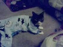 my baby cat  in jammies