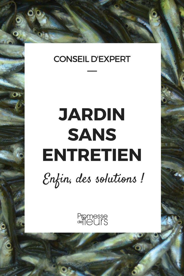 Jardin sans entretien poisson d 39 avril recettes - Jardins sans entretien ...