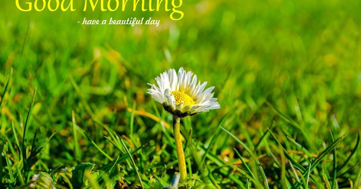 Fresh Morning Grass White Flower Free Greetings Card White Flowers Free Greeting Cards Flowers