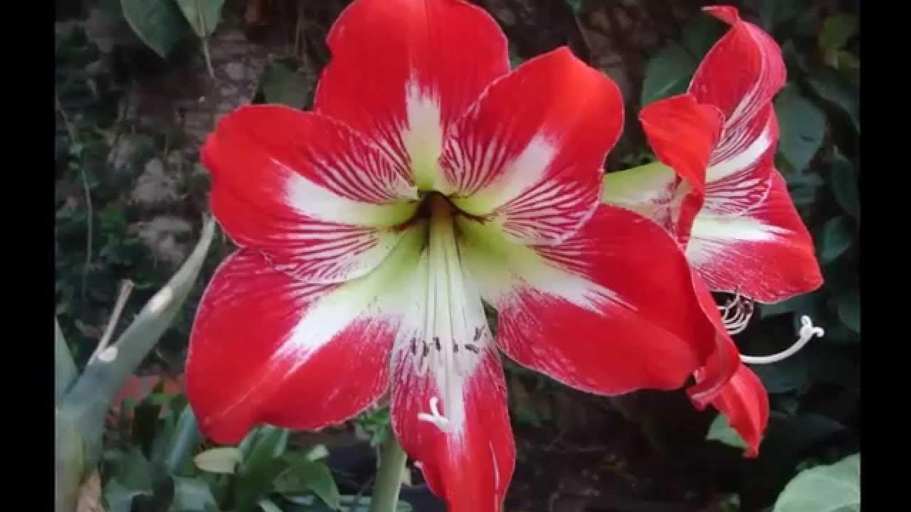Las flores mas hermosas del mundo top 25 ivan cucchi - Flores mas bonitas ...