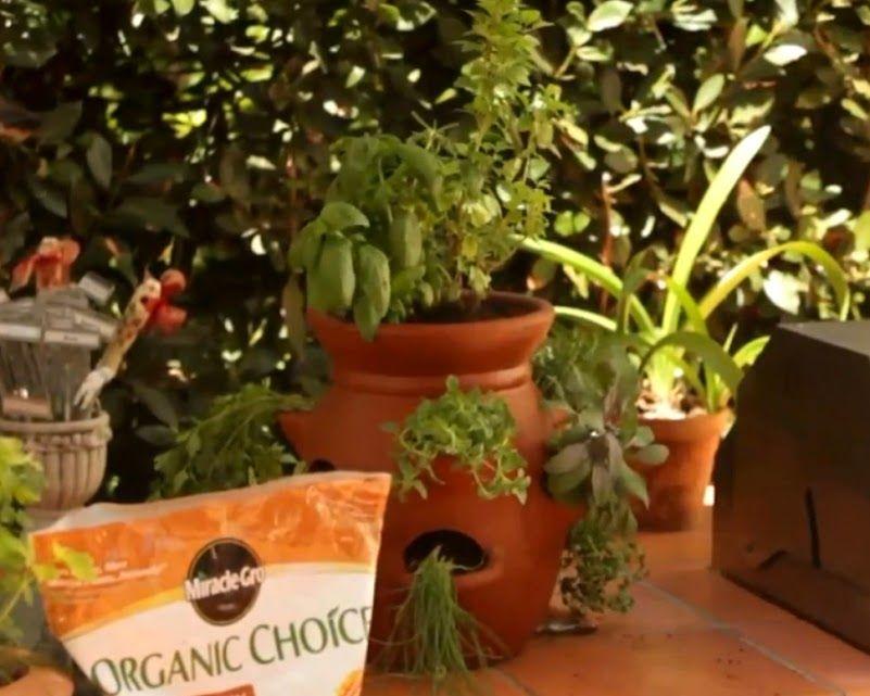 les 25 meilleures id es de la cat gorie jardins d 39 herbes en pots sur pinterest pots d 39 herbes. Black Bedroom Furniture Sets. Home Design Ideas