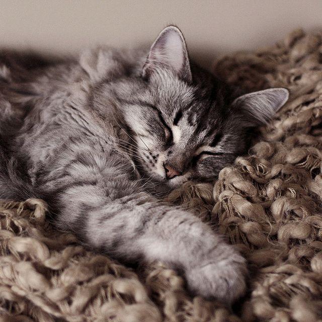 Snuggle kitty.