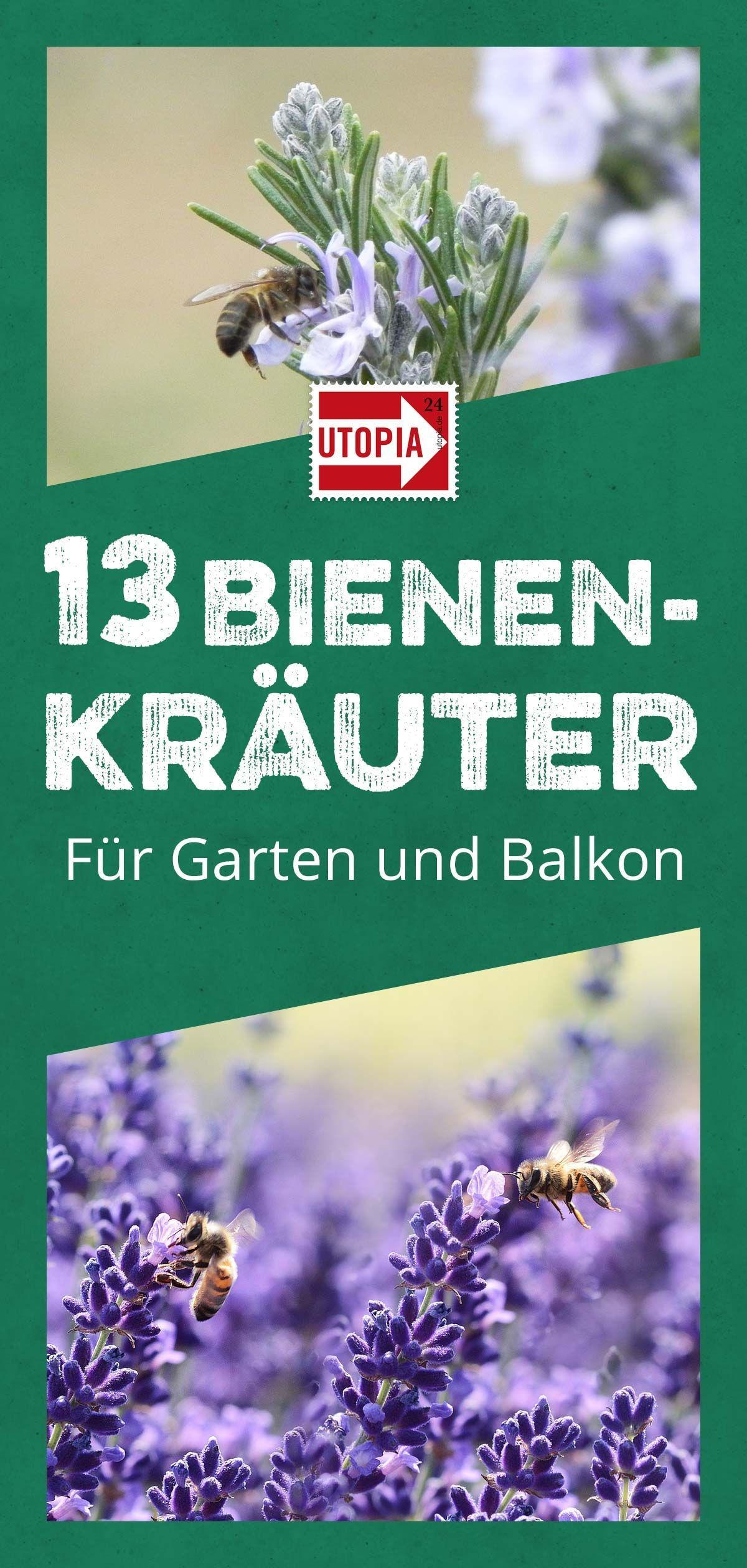 13 bienenfreundliche Kräuter für Garten und Balkon - Utopia.de #insects