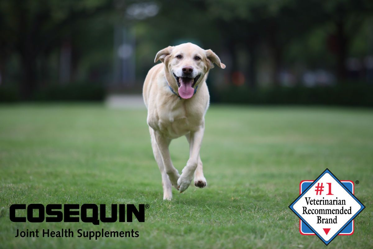 Visit Your Local Costco And Save Big On Cosequin Joint Health Products To Keep Your Dog Moving Http Www Costco Com Catalogs Dogs Cute Animals Joint Health