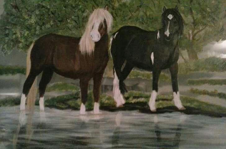 Chincoteague pony stallion Riptide and his mare Poco\u0027s Starry Night