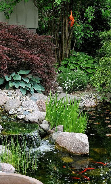 bassin avec cascade plant iris d eau hostas rable japonais pour un jardin ombrag et. Black Bedroom Furniture Sets. Home Design Ideas