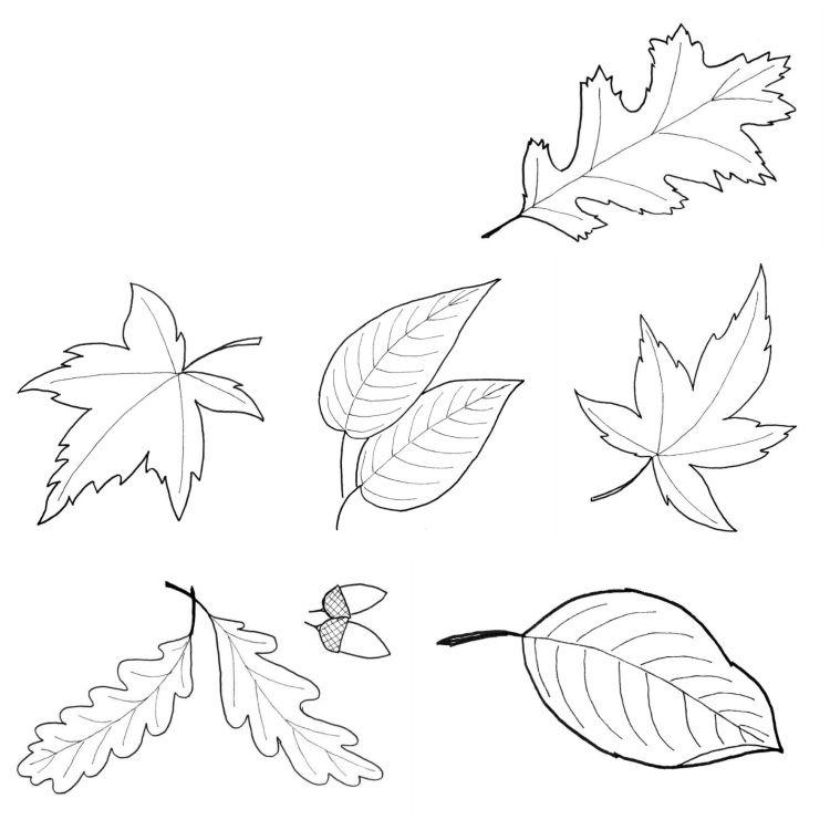 Vorlage zum Ausdrucken und Ausmalen - unterschiedliche Herbstblätter ...