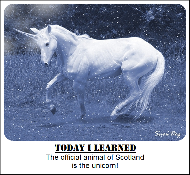 Image of: Magical Scotlands National Animal Today Learned The Unicorn Is One Of The Two National Animals Along Pinterest Scotlands National Animal Today Learned The Unicorn Is One Of
