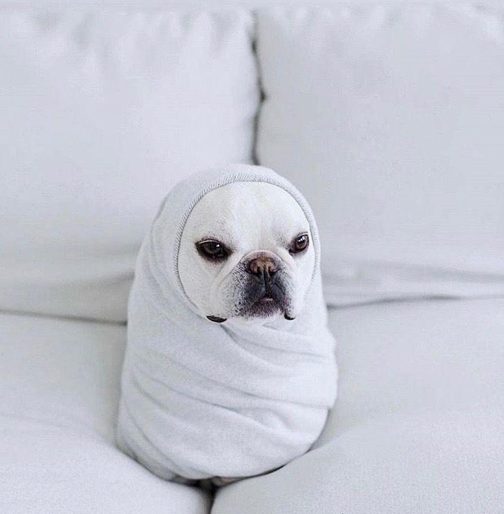 Pin by Joanna Goodman on DOGGIE s t y l e Cute animals
