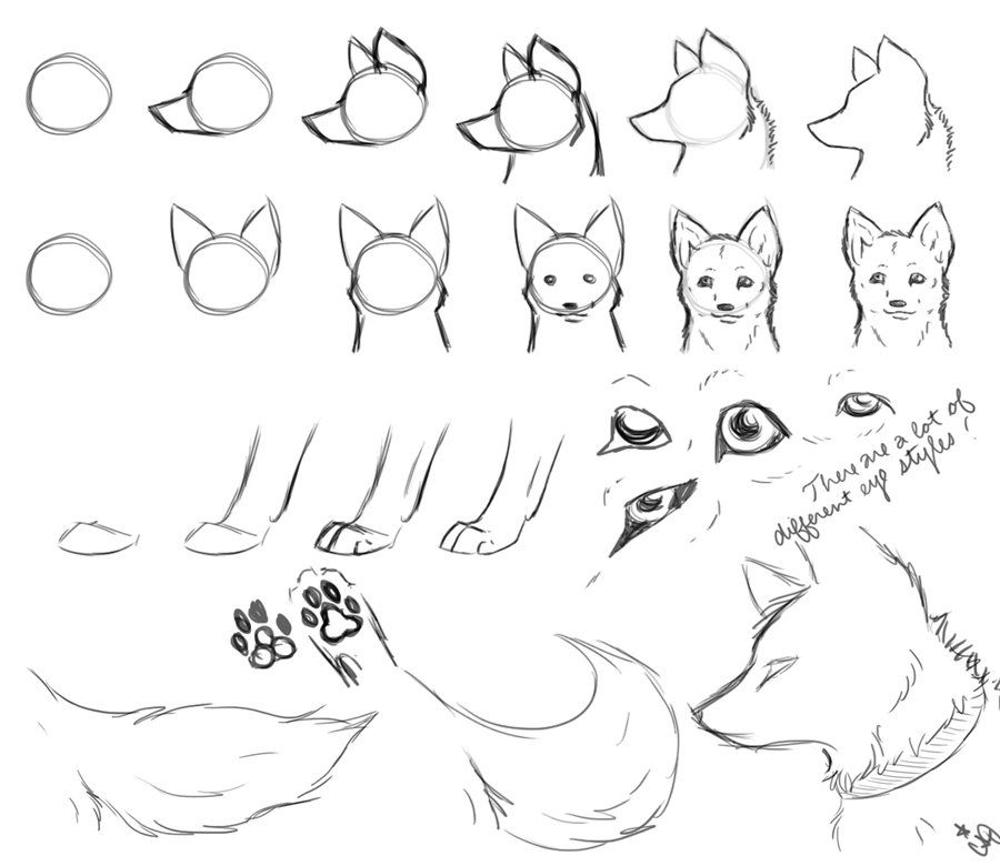 How To Draw Wolves Part 2 Drawings Animal Drawings Wolf Drawing