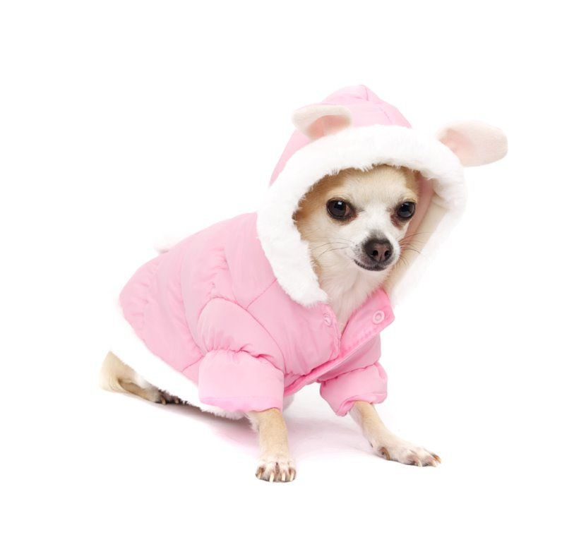 Get Your Furbaby This Warm Winter Dog Coat With Bunny Ears For