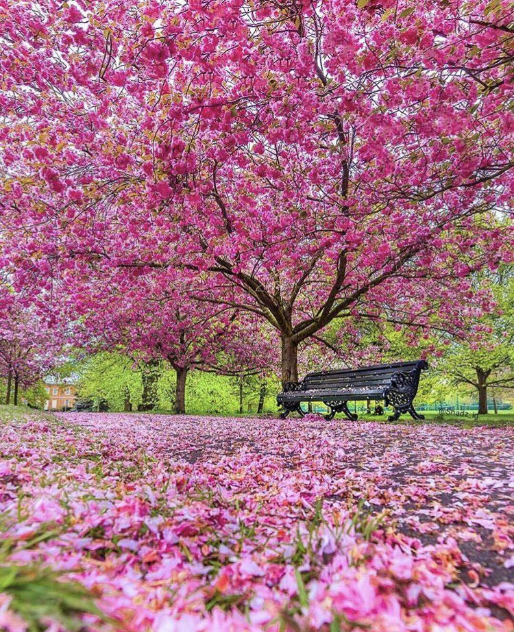 Earth Daily On Twitter Beautiful Gardens Greenwich Park Spring Scenery