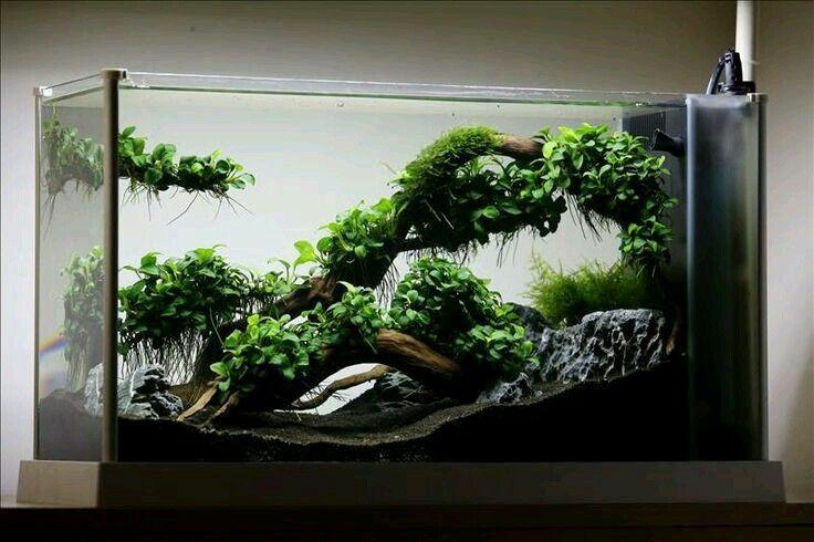 Anubias | Aquascape, Aquascape design, Aquascape aquarium