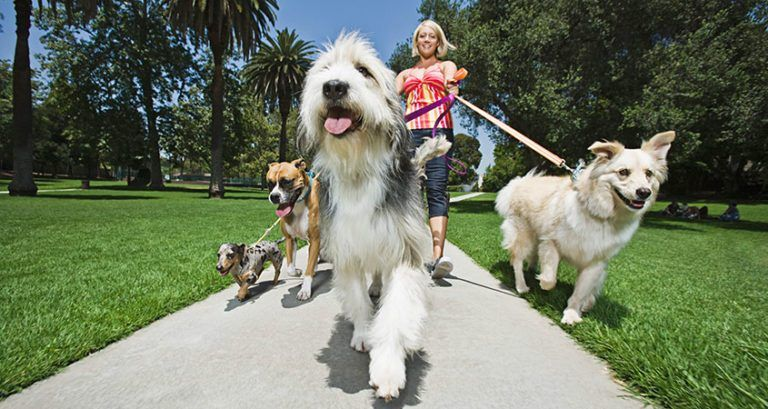 16 Effective Animal Shelter Fundraising Ideas - Pet Fundraiser Ideas #animalrescue