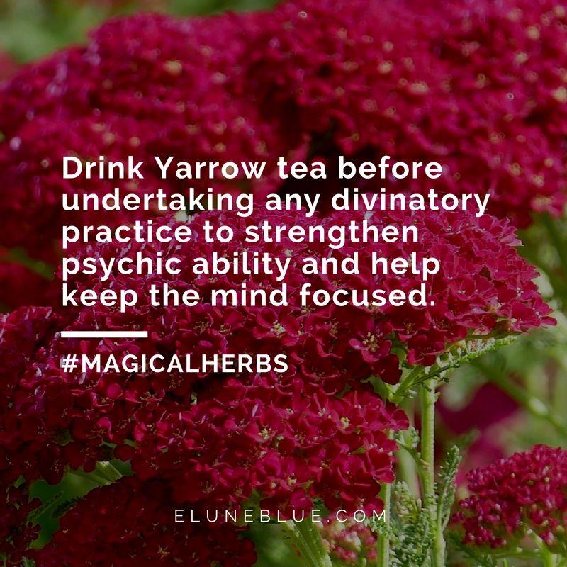 The Companion Herb Yarrow Magical Properties And Uses Magical Herbs Magical Herbs Herbs Magickal Herbs