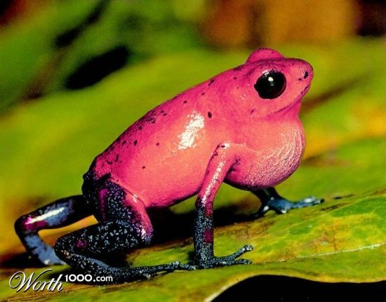 If You Were Expecting Worth1000 Com Surprise Poison Frog