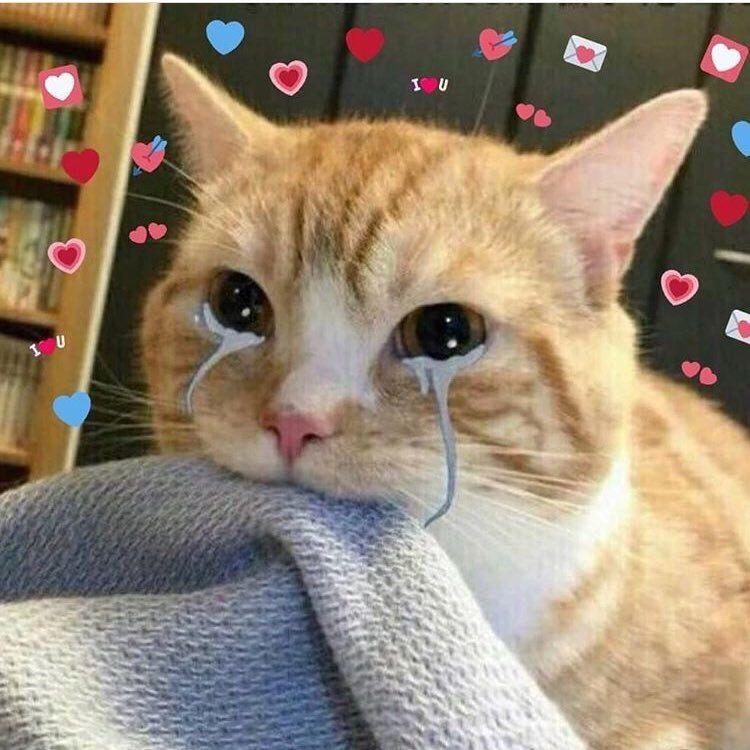 Memesta X Chatroom Dengan Gambar Kucing Bayi Anak Kucing