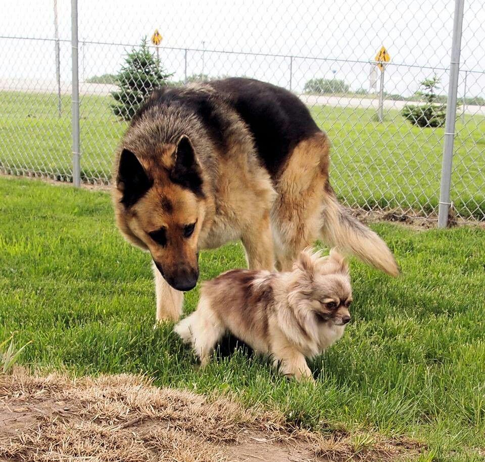 Iowa Rescues Dogs, Animals