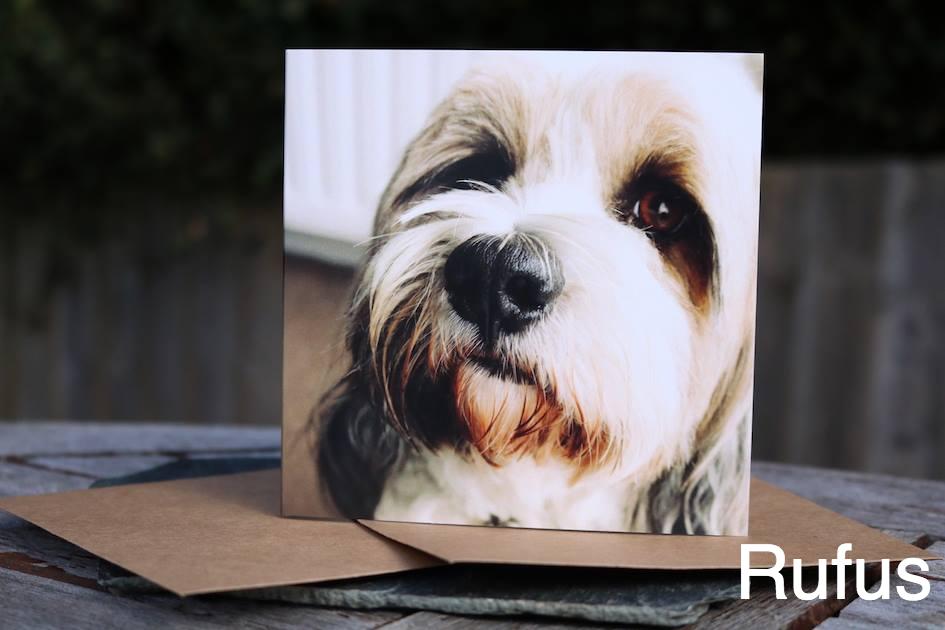 Dog Greeting Cards Dog greeting cards, Dogs, Dog photos