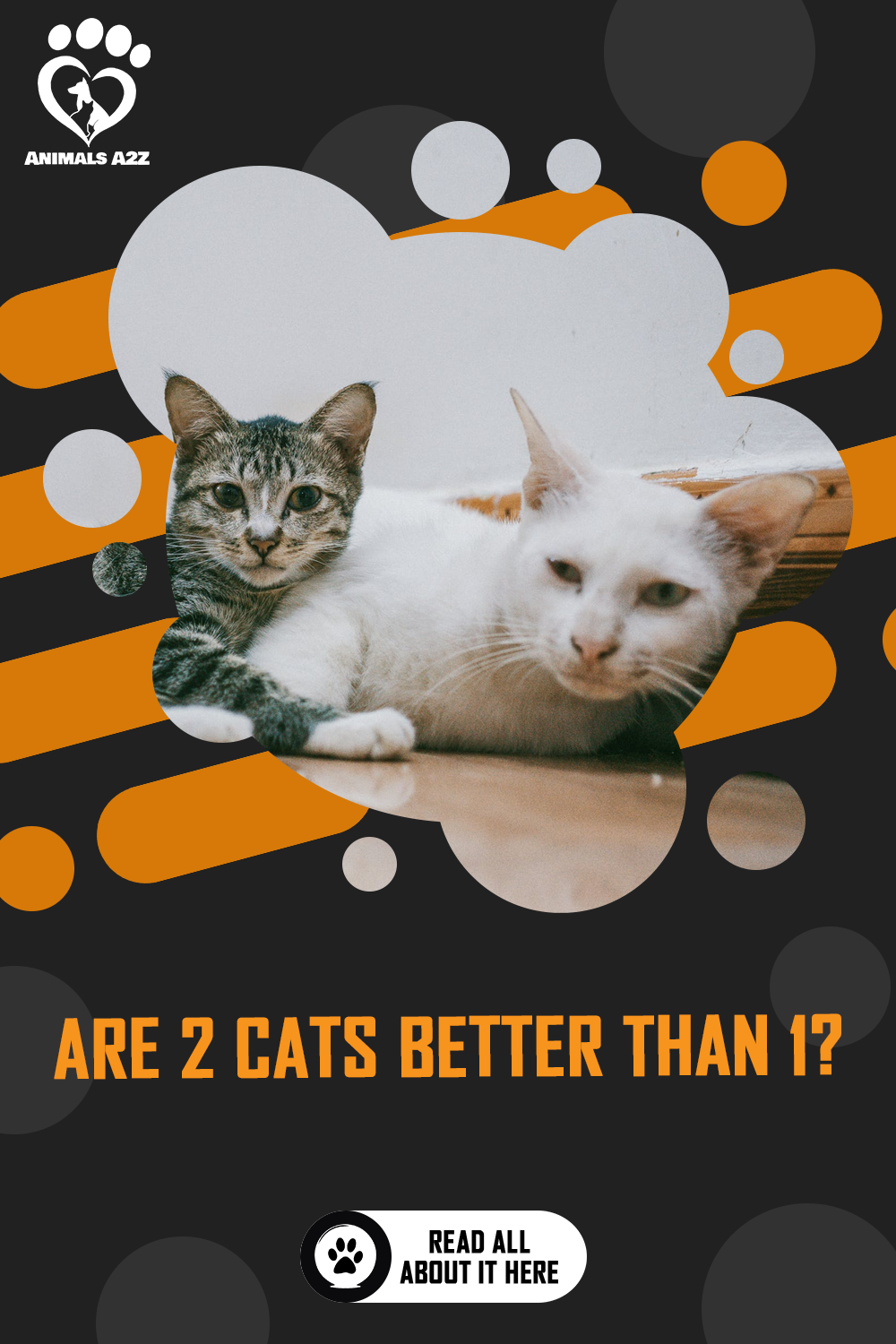 Are Two Cats Better Than One Detailed Answer In 2020 Cat Facts Cats Kitten Mom