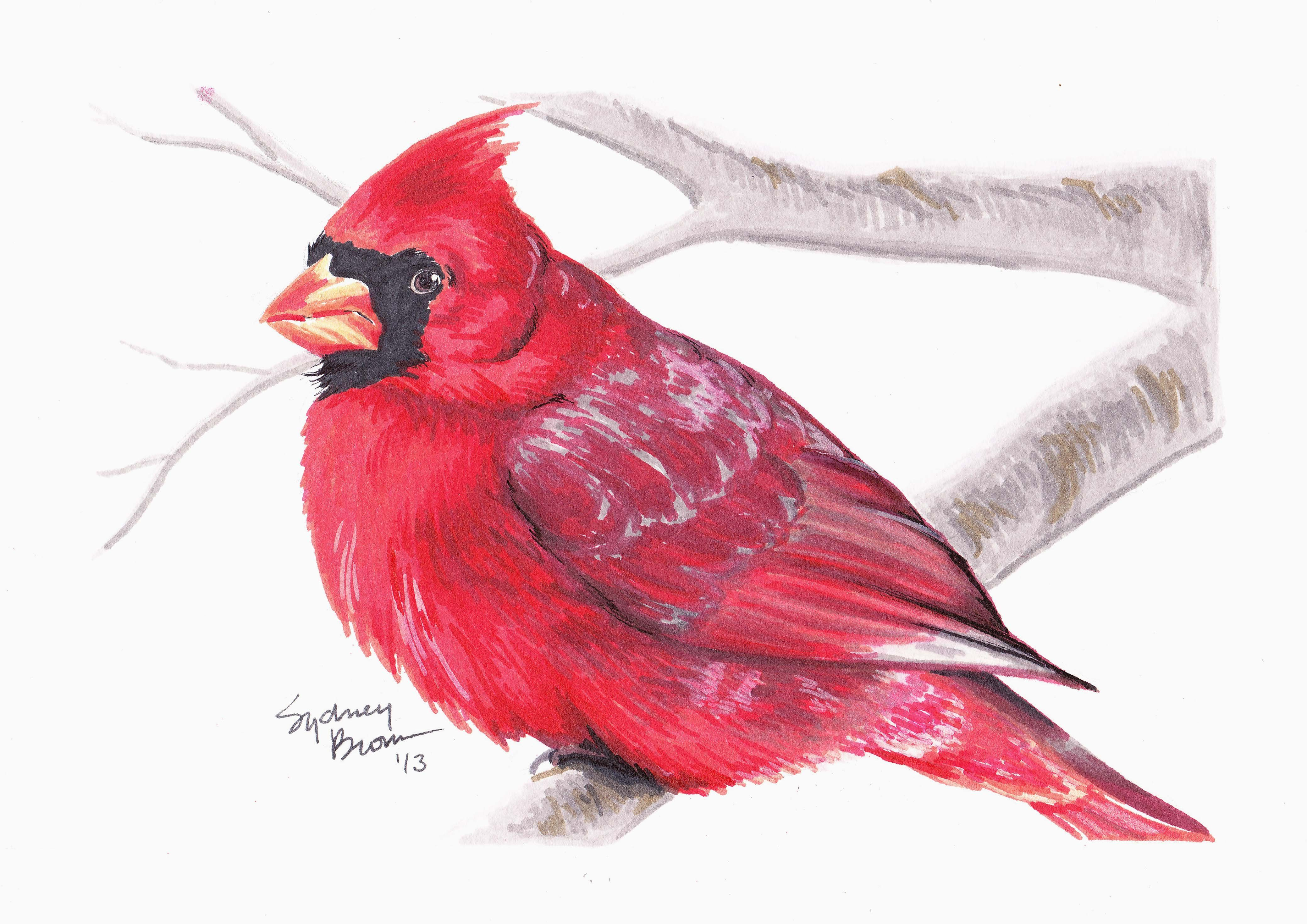 Abstract Pen Drawing Cardinal Bird Free Printable Math