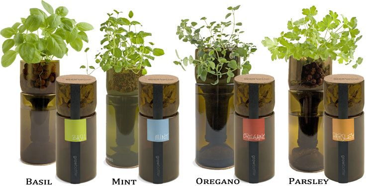 interesting way to upcycle wine bottles to create an herb garden maybe this way id be less likely to kill my herbs again need to find a good way to cut - Indoor Herb Garden Kit