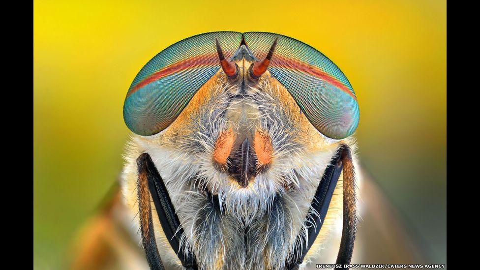 Imagen macro de un insecto. Ireneusz Irass Waldzik/Caters