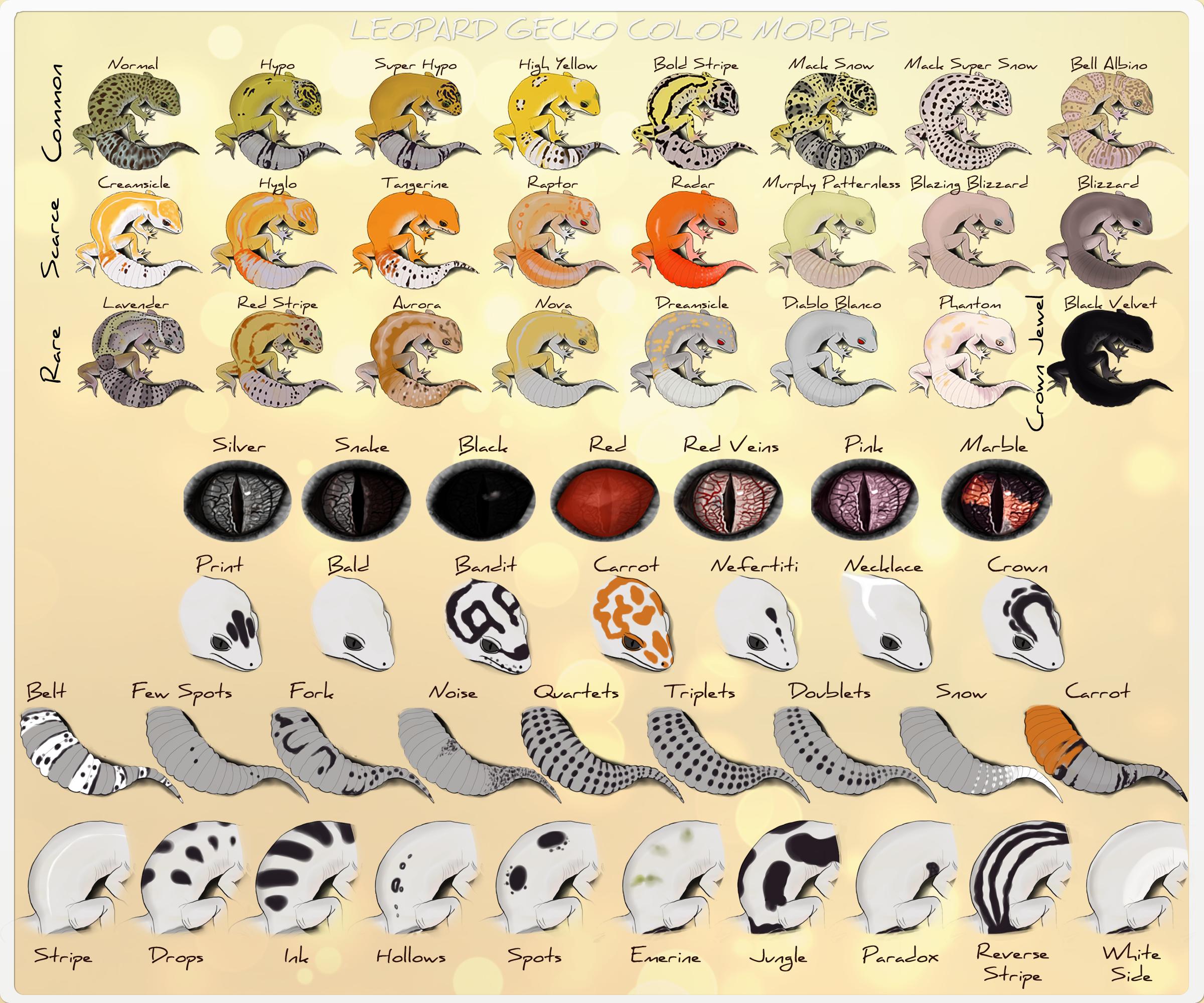 Leopard Gecko - Refference Sheet by Jasper-19 | DND LISZARD ...