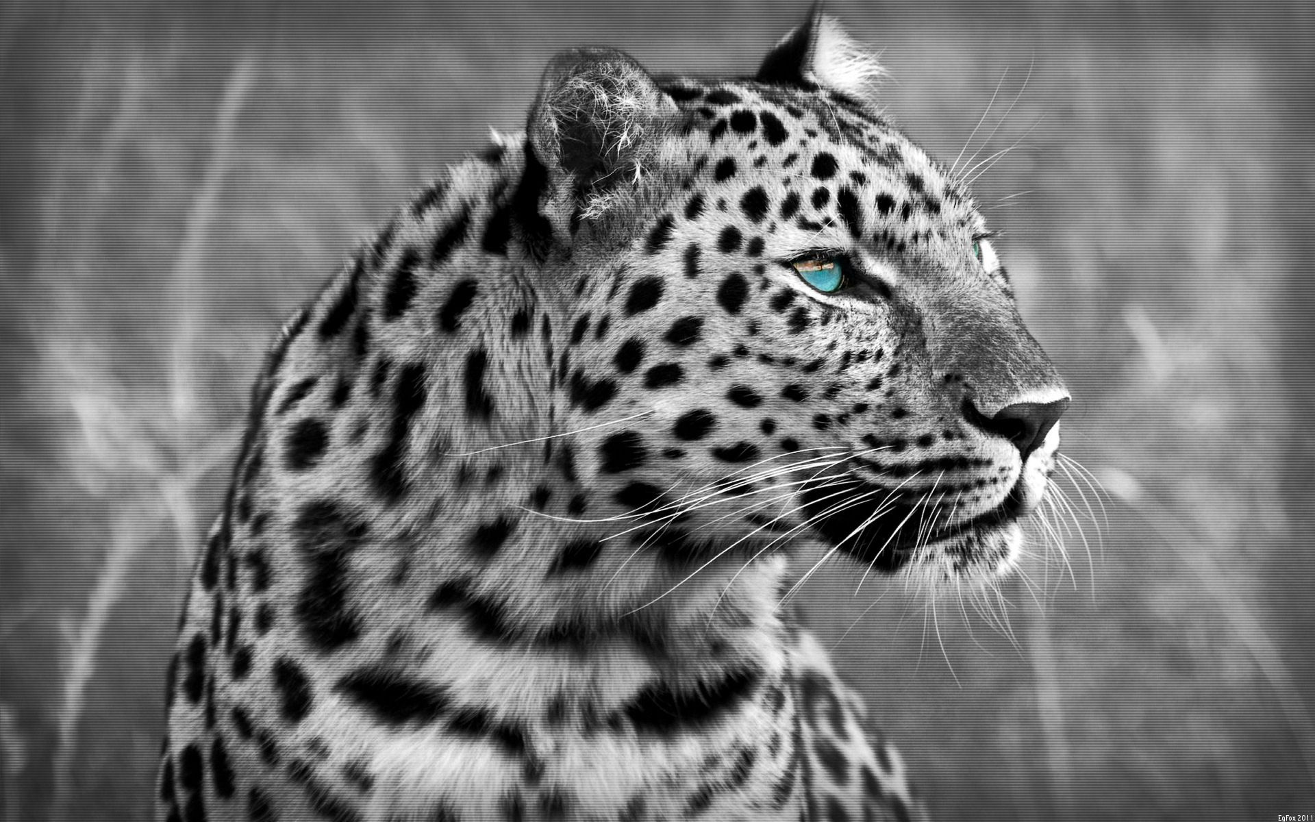 Blogger Leopard Wallpapers Images Download Wallpapers A