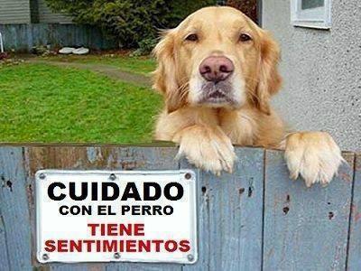 Frases Perros Wwwriverarcees Perros Frases Perros Y