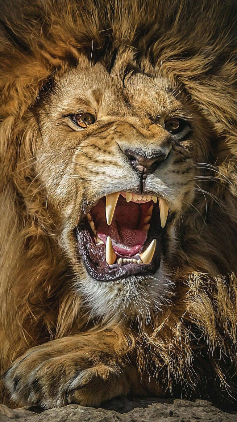 Great Lion Ultra Hd Wallpapers For Andriod Download In Link For Hd