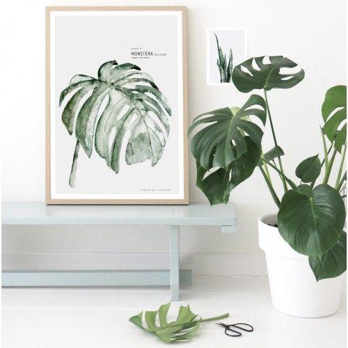 plante exotique botanic