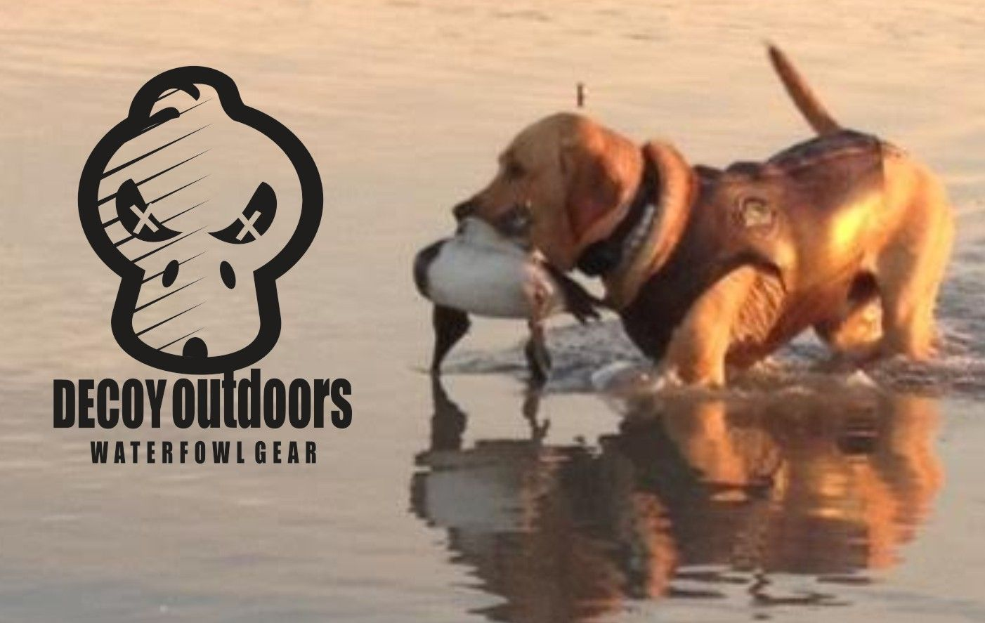 Pin On Duck Hunting Dogs