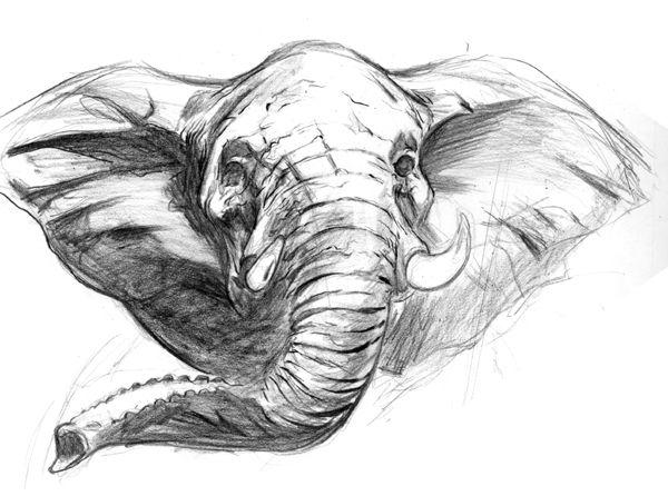 elephant drawing - Google Search | Elephant's | Pinterest | Best ...
