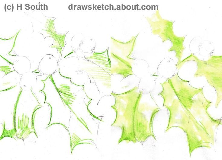 learn to draw a holly plant for christmas watercolor tutorials