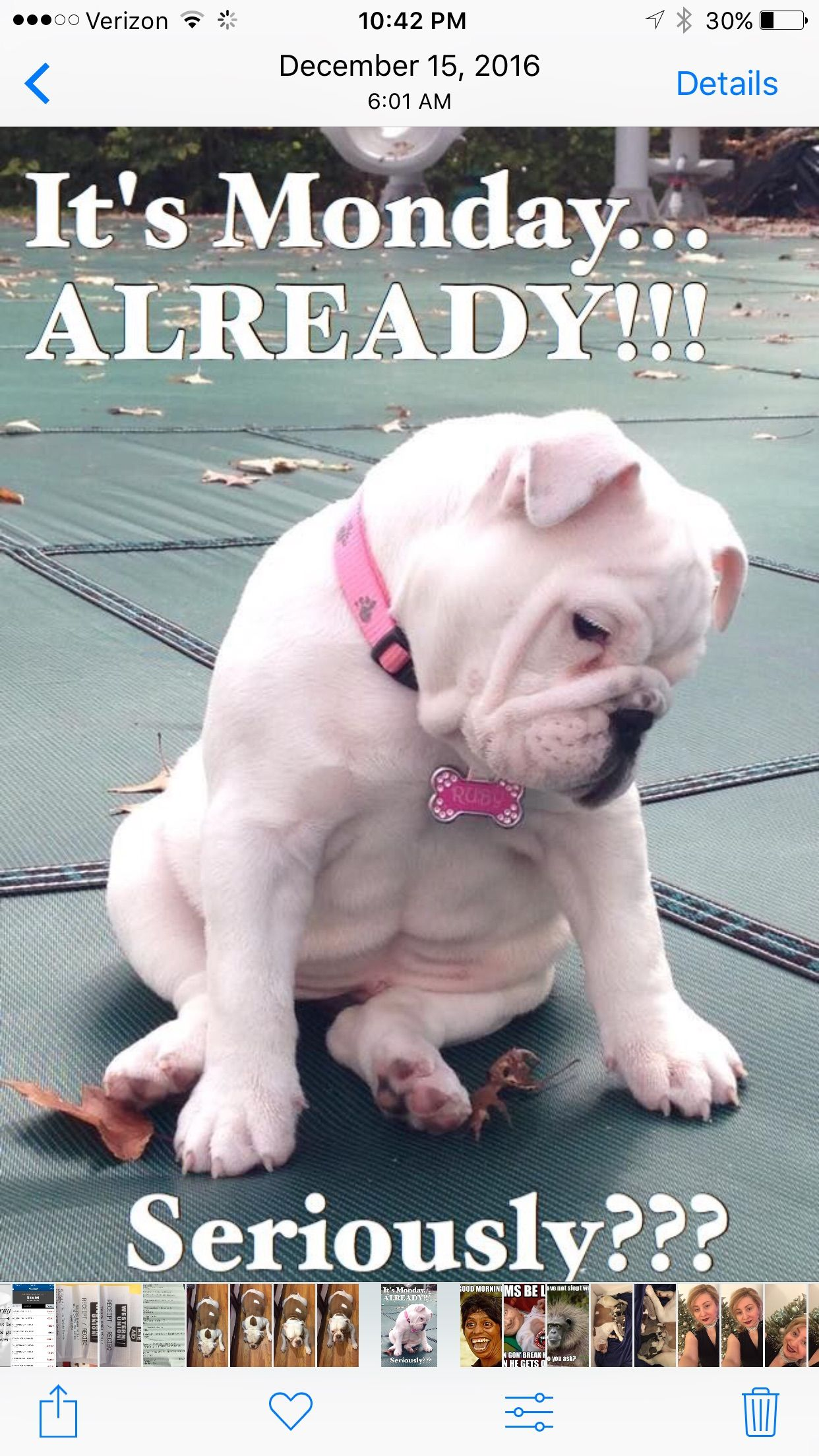 Pin By Diana Rios On Days Of The Week Funny Animal Pictures