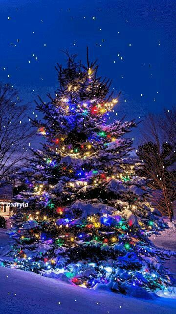 Pretty Outdoor Christmas Tree Animated Christmas Christmas Scenes Christmas Wallpaper