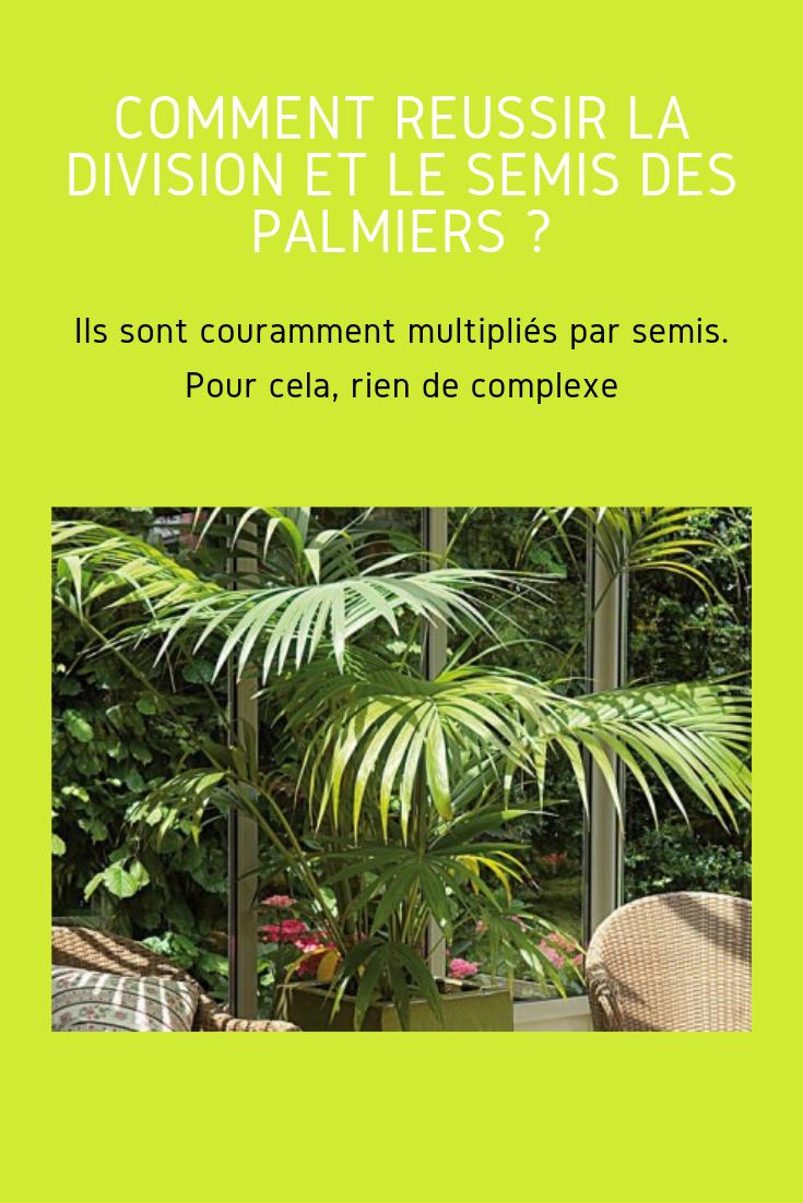 Comment Diviser Et Semer Le Palmier Conseils En 2020 Palmiers