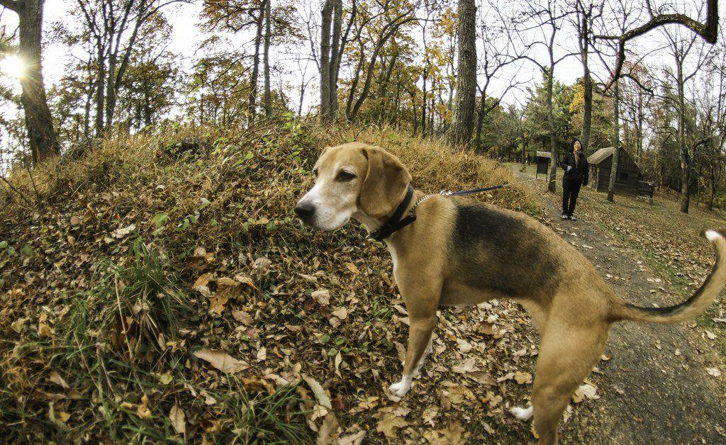 7 Top DogFriendly Hikes near Washington DC Hiking dogs
